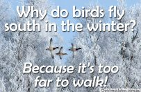 Why do birds fly south?