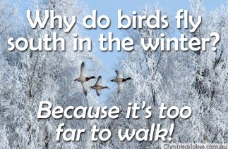Why do birds fly south?